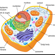 Cell Physiology And Pharmacology