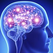 REHB2001- Neuroscience