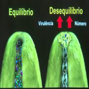 Endodontia 2