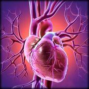 Cardiopulmonology Final