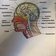 Altenpflege Zentrales Nervensystem