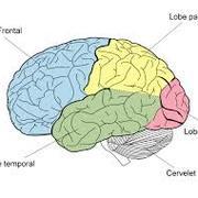 L2 Neurobiologie des Comportements