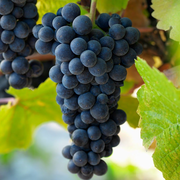 French Wine Pro