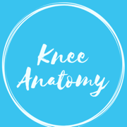 Knee - Anatomy