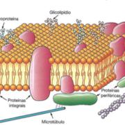 Biologia Celular 1° Semestre