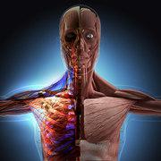 BIO125 Physiology