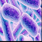 Microbio lecture