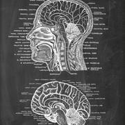 Monitoria de Neuroanatomia