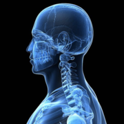 Head & Neck - Anatomy (Year 2)