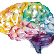 Neuroanatomia - Diencéfalo