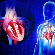BNF: Cardiovascular System