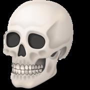 Cráneo y Columna