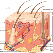 Dermatology System
