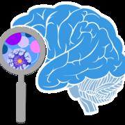 Hjärnans delar & dess funktioner