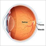 Opthamology- Retina