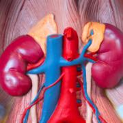 Renal & Urology