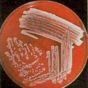 Biomol - Procariótos
