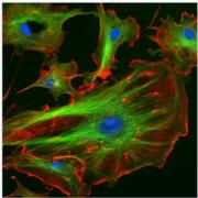 Biomol - Eucariotes