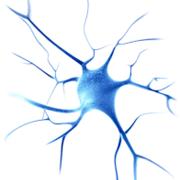 Neurology- Physiology