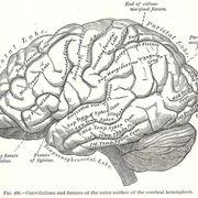 ANATOMY - Neuro