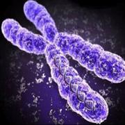 Z.D. Genetics and Genomics