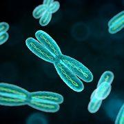 BIO163 Molecular Genetics