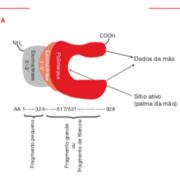 Biologia Molecular - Replicação do DNA - Zaha