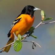 Ornithologie - Excursion