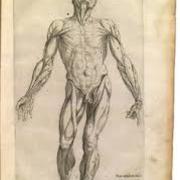 S.N Anatomy IV