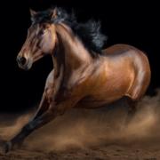 VET608 - Equine General Practice