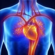 2.0 cardiovascular system