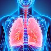 3.0 Respiratory system