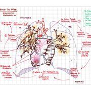 Fisiopatológia Respiratoria