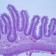 Morfologisk cellbiologi