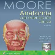 Anatomía Regularización