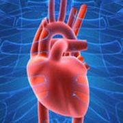 Cameron's Cardiovascular