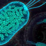 Mecanismo de agressão e defesa - Bacteriologia