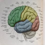 Klinische Neuropsychologie (Master Saarbrücken)
