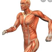 Musculokeletal Phyt I