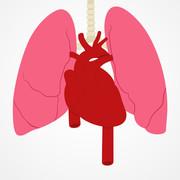 Cardiology and Respiratory Medicine