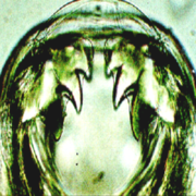 Parasitology (B)