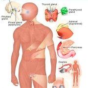 Endocrine in sport