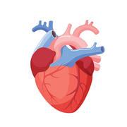Bello , Cardiología