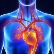PSL 1996 - Anatomie et Physiologie Générale 1