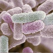 GBA Microbiology