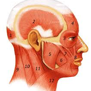 Applied Head and Neck Anatomy
