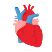 MED-1203 Cardiovasculaire