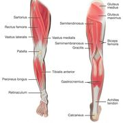 Group 6C Revision Lower Limb Anatomy