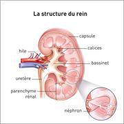 Néphrologie 2