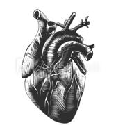 Cardiology Extra